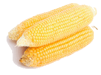 Image result for corn always has an even number of rows on each ear